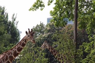 Willkommensklasse im Zoo